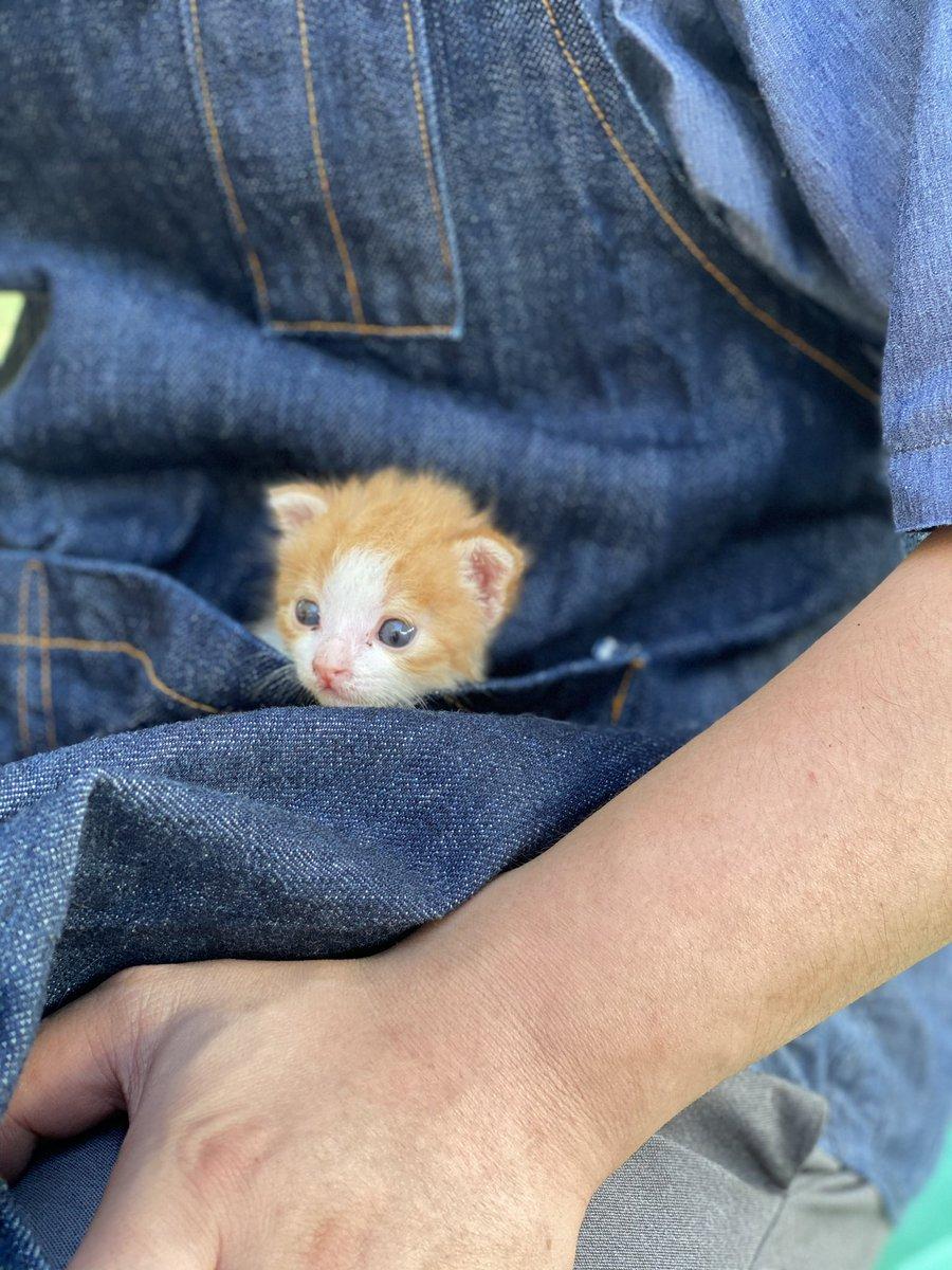 新しいファッションになるかも?!子猫を胸のポケットに!お爺さんたちも嬉げ