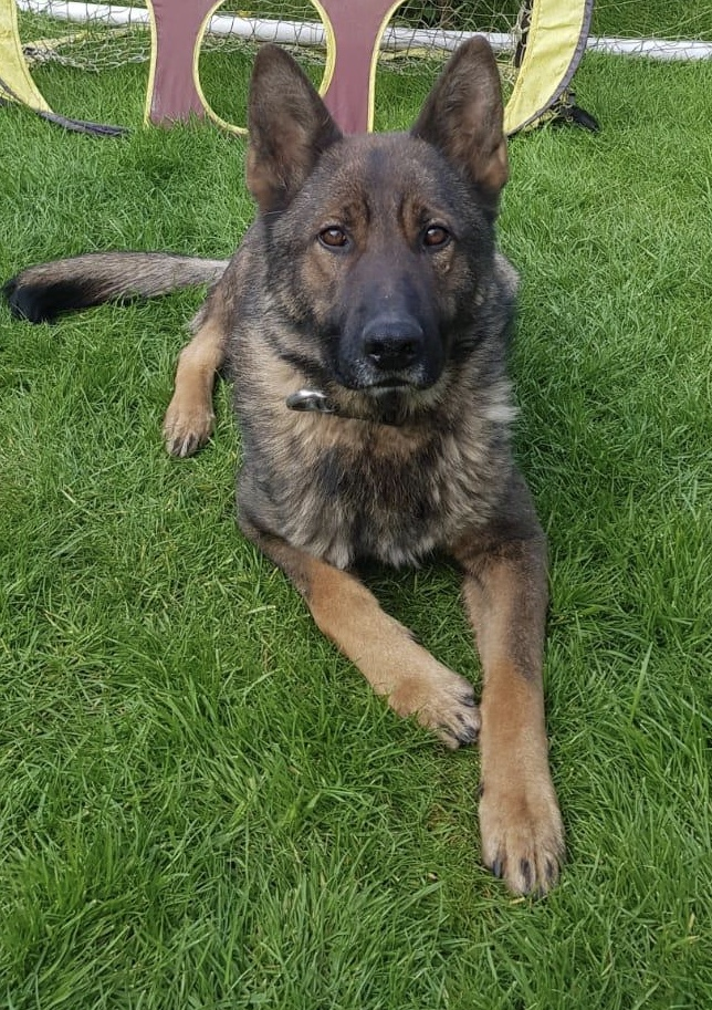 May the Fourth be with you!!! Here is our own Star Wars Fanatic PD Yoda. #Starwars #Yoda  @gmpolice https://t.co/IMPO0OTOVg