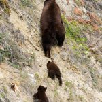Image for the Tweet beginning: Follow the leader. 🐻  Please remember
