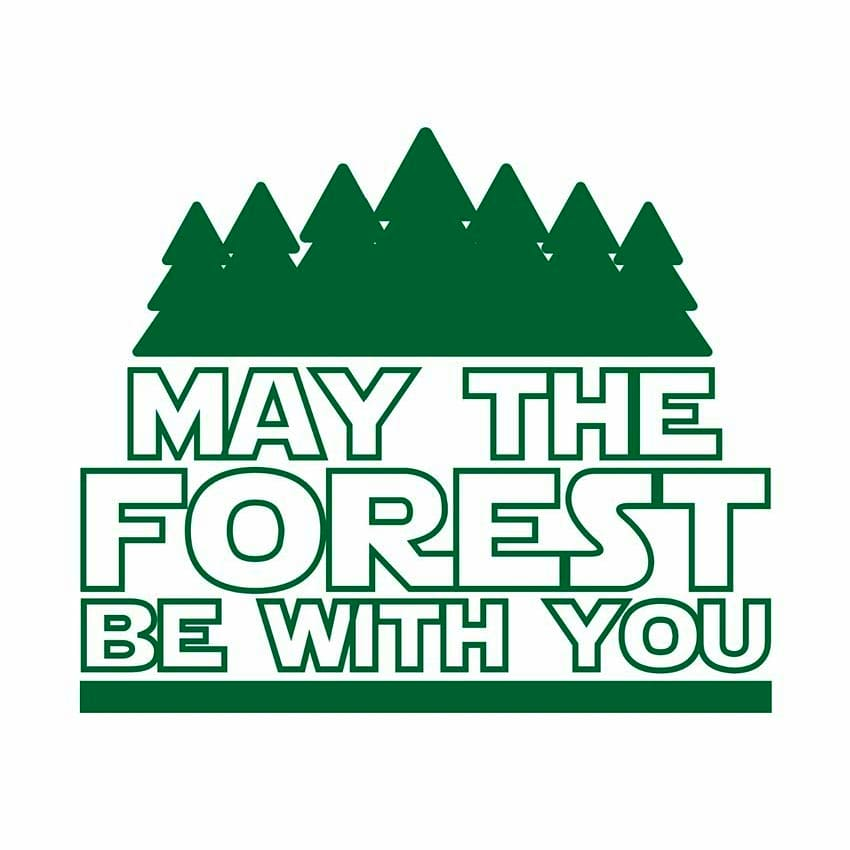 Star Wars Day is also #TreeTuesday 🌳 Do you have a favorite tree or is that just me? https://t.co/8ZKJqTp9LM