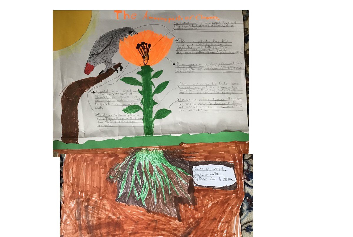 Ss created a drawing of the parts of a plant and the very important pollinator. <a target='_blank' href='http://twitter.com/APSscience'>@APSscience</a> <a target='_blank' href='https://t.co/QhAfFJZ6Jv'>https://t.co/QhAfFJZ6Jv</a>
