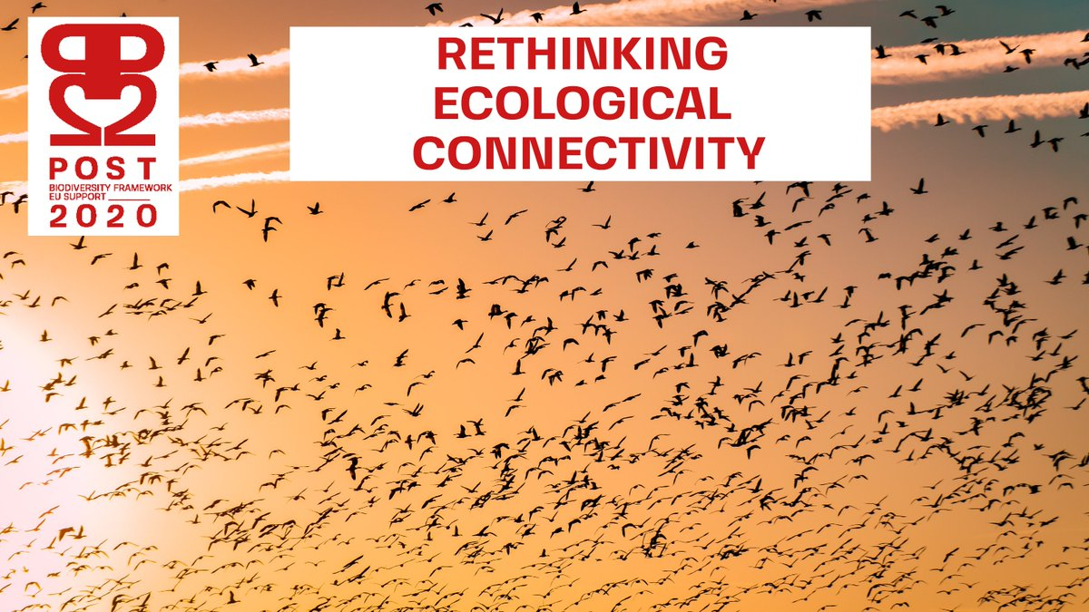 "RT @4Post2020BD NEW PUBLICATION 🚨 ""#Connectivity is essential for nature and thus it must be effectively addressed in the #post2020 global biodiversity framework.""@fraenkelamy @BonnConvention   Read our paper on Rethinking Ecological #Connectivity  ➡️https://t.co/JqdGH3mWeo   @UNESCO_MAB #COP15"