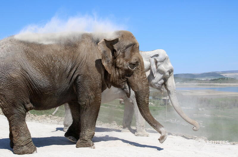 Elephants dust themselves with soil at Taigan safari park in Belogorsk, Crimea. More photos of the day: https://t.co/XN6Y89c7EY 📷 lexey Pavlishak https://t.co/4dyxvUK0iR