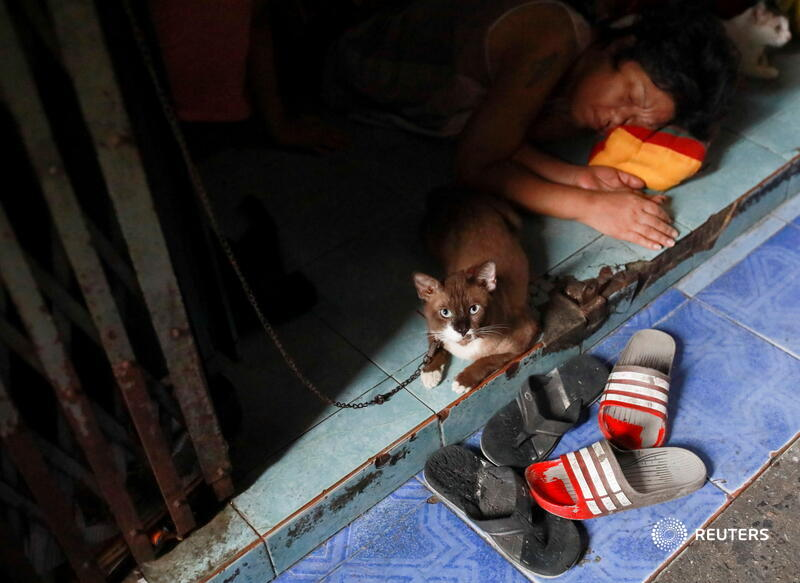 A woman sleeps next to her cats in the Klong Toey community in Bangkok, Thailand. More photos of the day: https://t.co/tzLiRXK6ID 📷 @soezeya https://t.co/YvTUpbogHq
