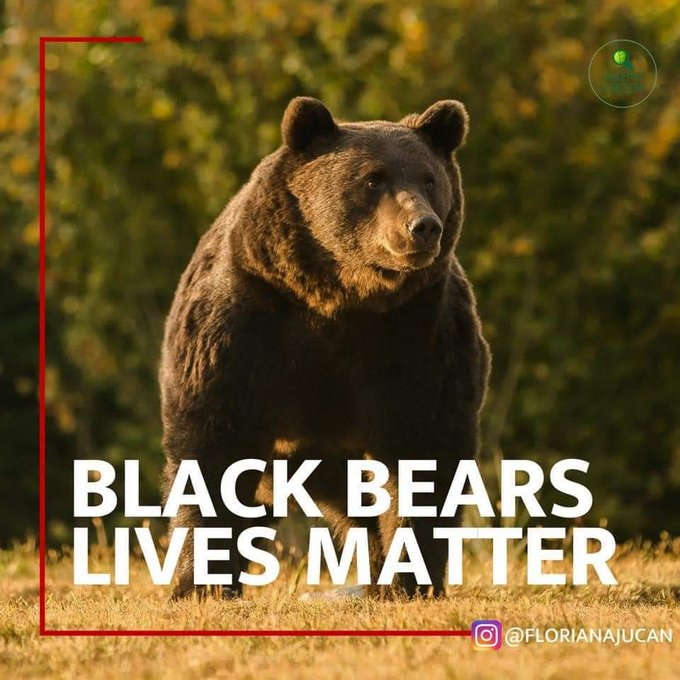 Prince blamed for shooting one of Europes biggest bears Photo