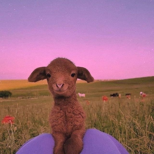 RT @tasfiahnisa: if you had a bad day, here's a pic of a cute goat https://t.co/nlUZnvNN1e