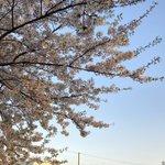 KOTOKO_Dwarfのサムネイル画像