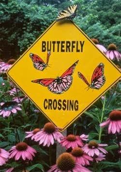 Fun activity for hiking kids: Butterfly Garden   #kidstoparks #kidsunplugged #LoveCamping  https://t.co/Hx6VP8VpHC https://t.co/bKD8pRqFVm