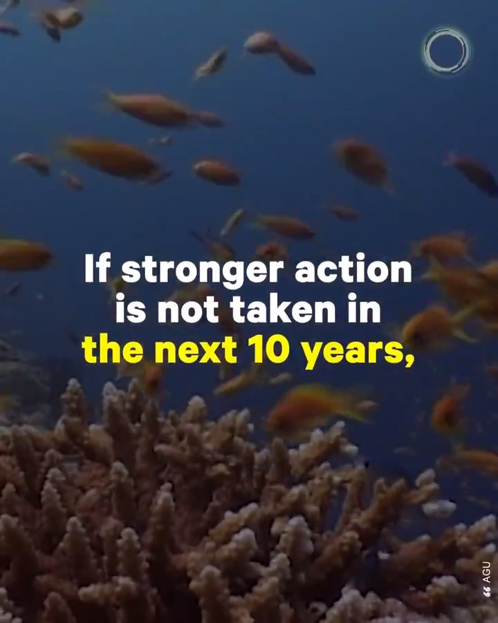 Scientists predict that 70% to 90% of all coral reefs could disappear in the next 20 years as a result of warming ocean waters, ocean acidity, and pollution — marine biologist David Obura explains what's at risk if stronger action isn't taken soon https://t.co/YTF2DaLonT