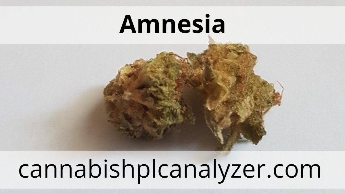 cannabistest1: Amnesia strain Highest Measured Values Total THC 25.66% Total CBD <0.05% Total CBG 0.22%  #hplc #testing #Mmemberville #CannabisNews #Hemp #Canna #Europe #USA #CannabisCommunity #cbdproduct #cannagrower #cannabisculture #cannabisindustry  #testing #cannabinoids #cbdoil #Spain