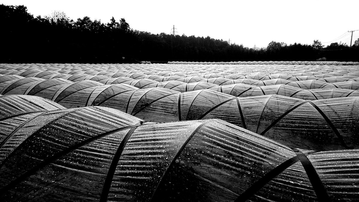RT @kazu75392264: rainy greenhouse  #blackandwhitephotography #photographer #greenhouse  #rain https://t.co/XEQ7ZjMWTF