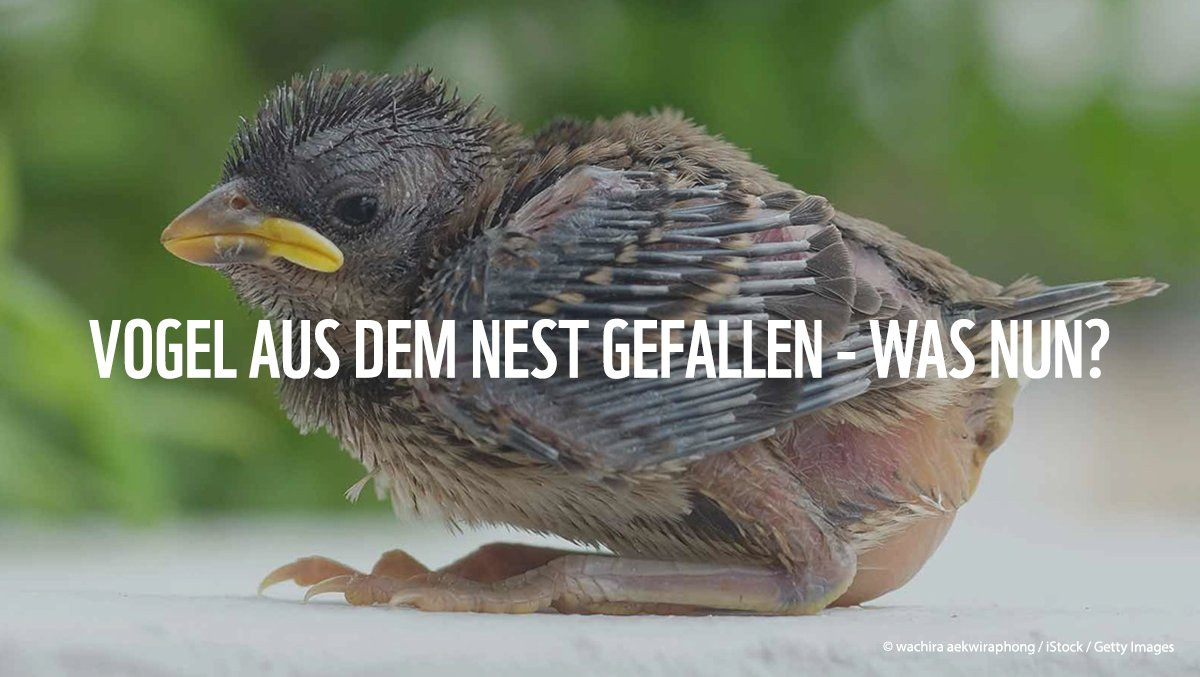@WWF_Deutschland's photo on Vogel
