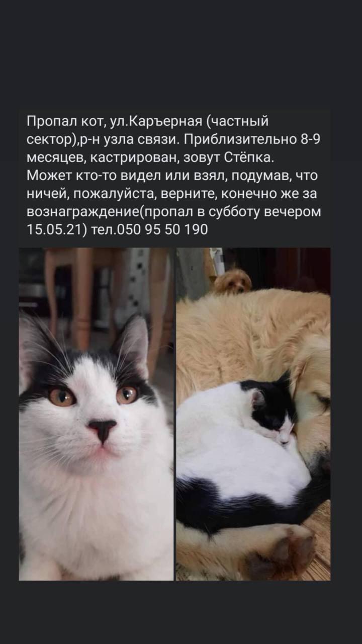 У Нікополі пропав кіт: допоможіть його знайти