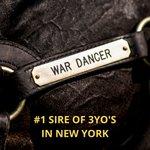 War Dancer's 3YO'S have been finishing in the money. Watch for his 2YO'S to hit the tracks this Spring. #wardancerstud #ihdvStallions #sugarplumfarmsaratoga