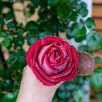 見た目は完全に薔薇!?山形県のあつみ温泉街にあるバラ園の薔薇型アイス!
