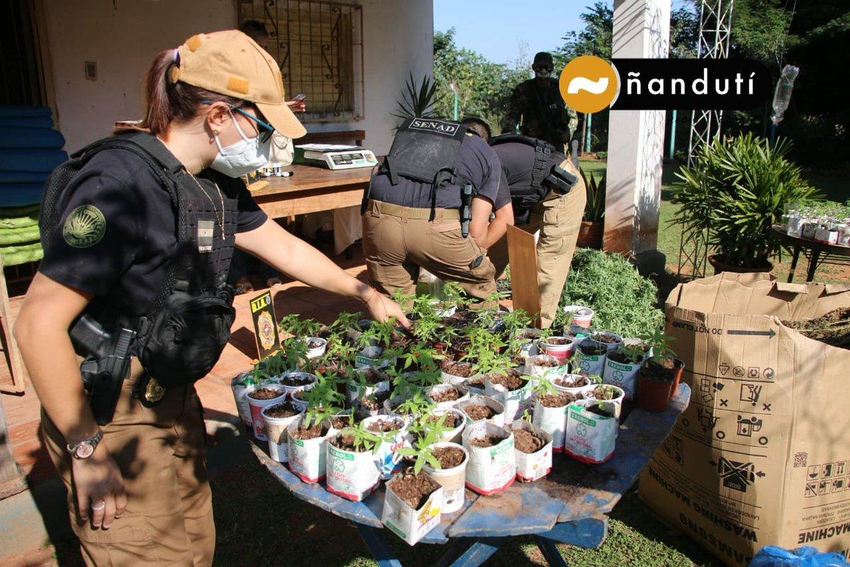 un nou ambalaj pe bază de plante subțire)