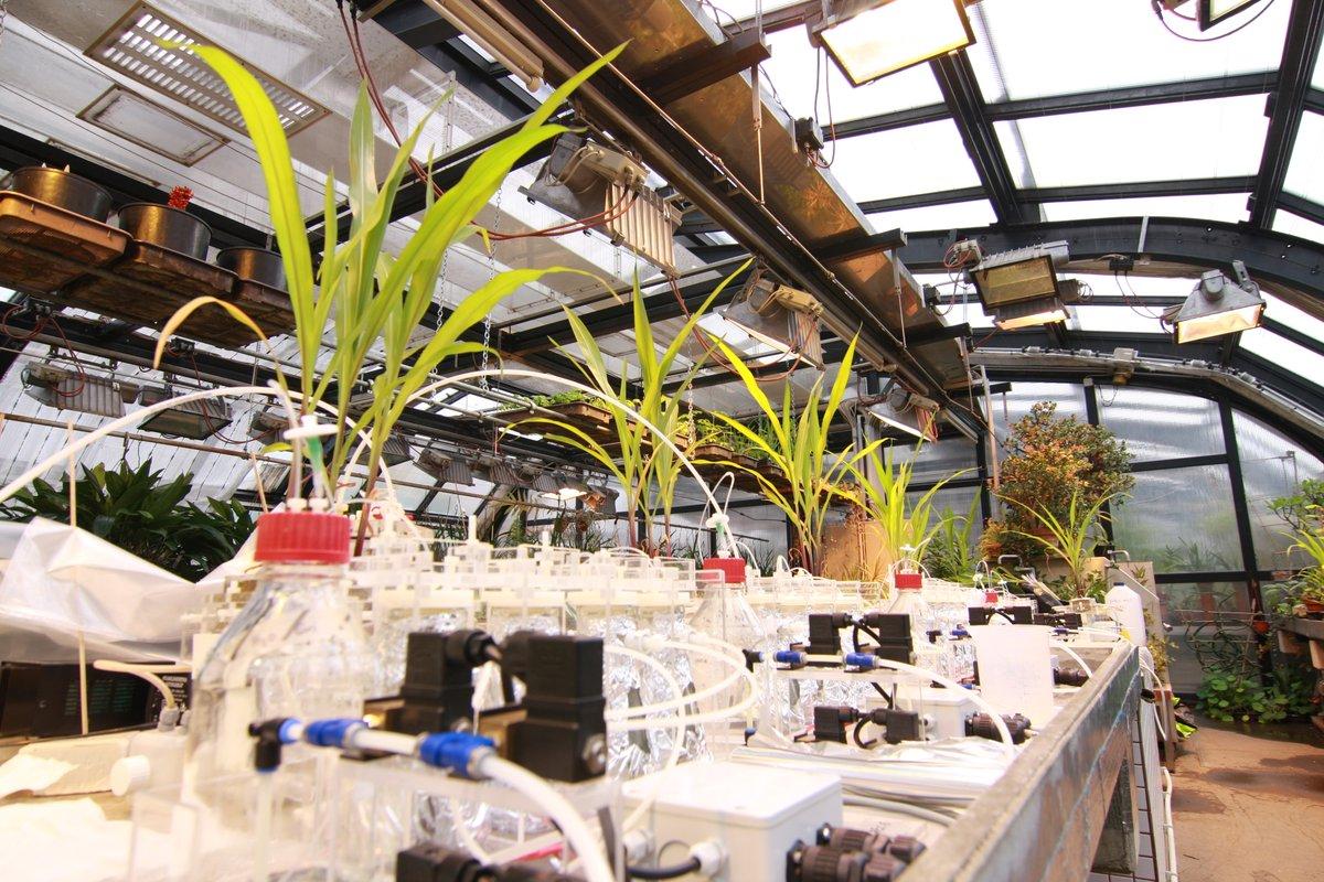 VBCF_PlantS photo