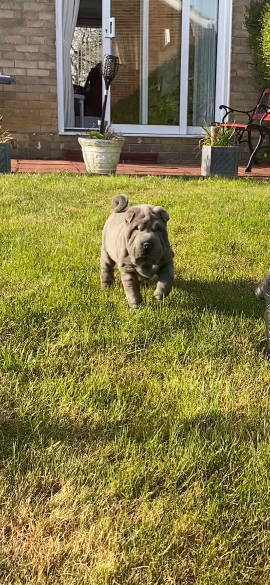 test Twitter Media - We'd like to introduce you all to Ted, the newest four-legged addition to the jmm PR team 😍 (Technically he belongs to Tessa, our Senior PR and Social Media Executive, but this gorgeous Shar Pei puppy is welcome at the jmm PR office any time 😂🐶) https://t.co/O89hfFMpCB