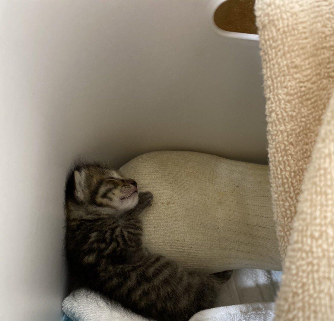 参考にしたい!動物病院で聞いた子猫の保温の術がこちら!