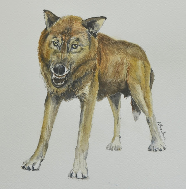 test Twitter Media - RT @iphespressprac: Abrimos hilo sobre el descubrimiento de una nueva especie de pequeño lobo, Canis orcensis @iphes https://t.co/DPLt4Xzk7d