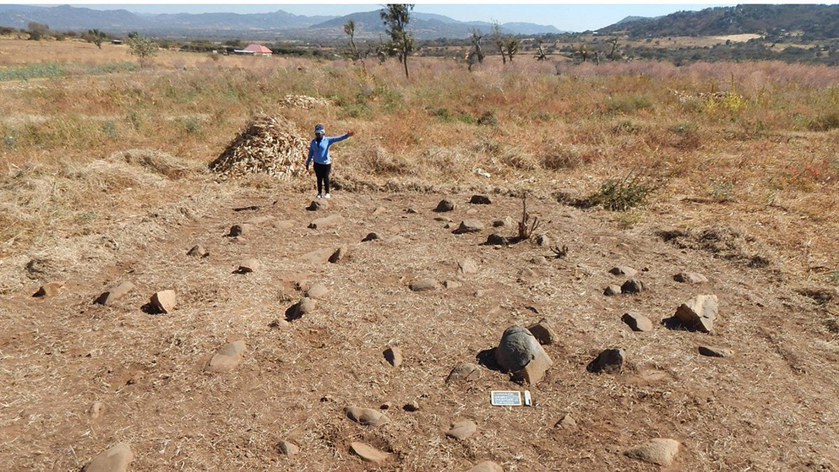 These are grinding stones found at the ~3,000-year-old site of Luxmanda in 🇹🇿.   Their size would make them difficult to move, which is odd as the inhabitants were mobile herders.  This find by @prendydigs et al. is in a 🆓 #AfricanArchaeology collection https://t.co/dsgPiBkCAP https://t.co/dETpKZA9gm