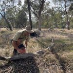 Staff from #moirashire & @ParksVictoria  joined us recently to hear ecologist Chris Tzaros speak about the importance of the ground layer for wildlife habitat & nutrient recycling. Read more about 'The Ground Storey' here: https://t.co/1b3201PmFv #NLP @AusLandcare