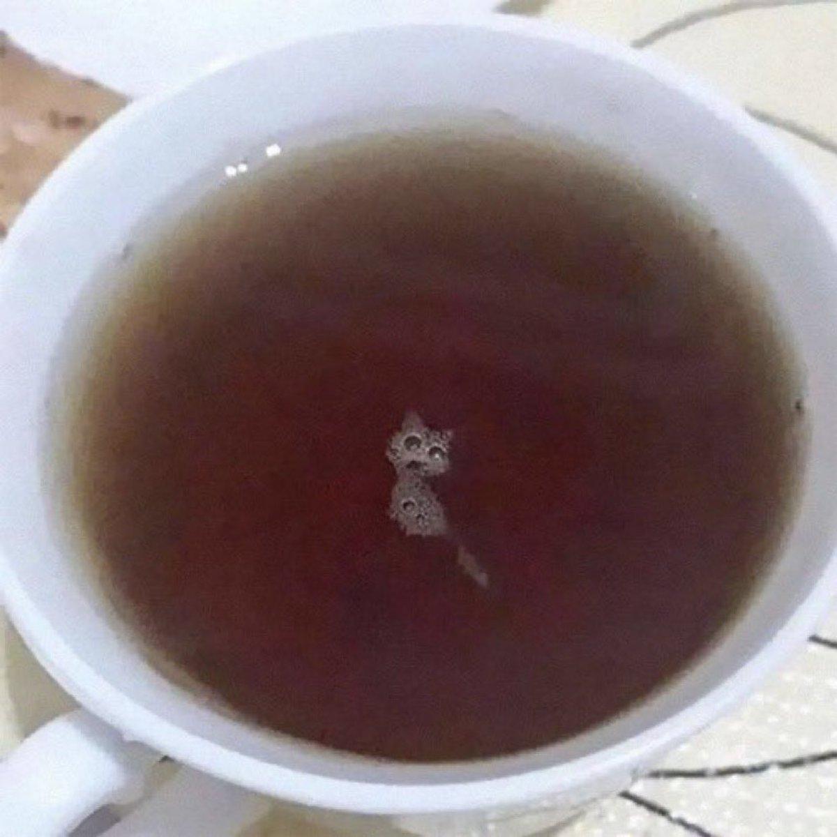 ミラクルな奇跡!?コーヒーを飲もうとしたら猫がいたw