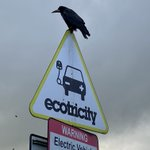 Image for the Tweet beginning: Is this crow at Membury