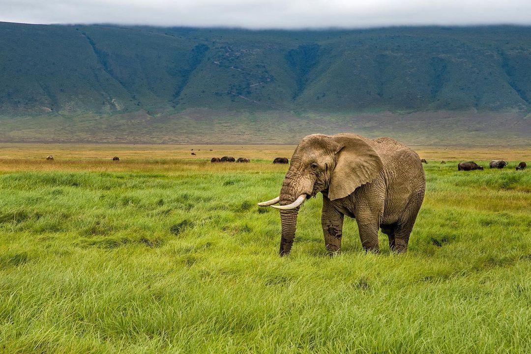 Terkini Ngorongoro