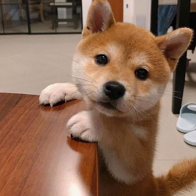 @dogeofficialceo's photo on Doge