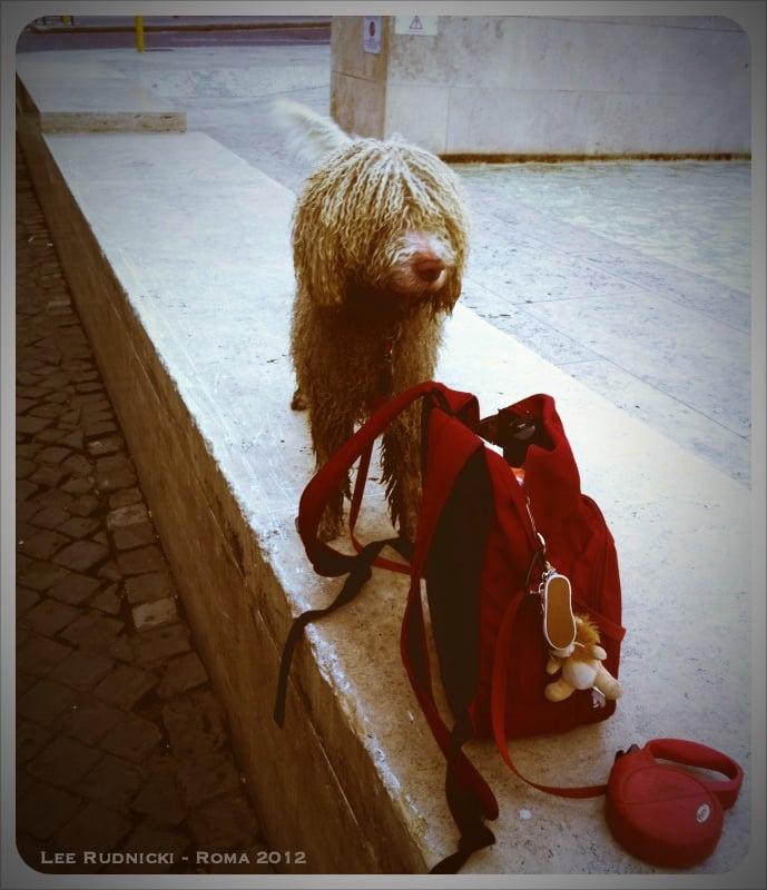 Roma Dog 1 #leerudnicki #photography #rome #roma #italy #italia #travel #ig #art #love  #picoftheday #igersroma #instagood #romeitaly #photooftheday #travelphotography #lazio #europe #igersitalia #paris #like #visitrome #instagram #history #photo #follow #travelgram #bhfyp #dog https://t.co/QWtJgGvkR9