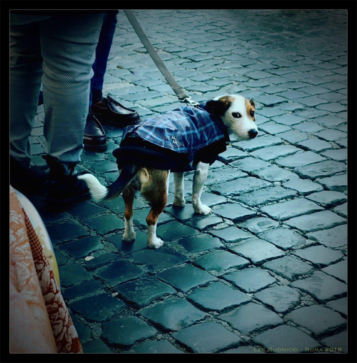 Roma Dog 3 #leerudnicki #photography #rome #roma #italy #italia #travel #ig #art #love  #picoftheday #igersroma #instagood #romeitaly #photooftheday #travelphotography #lazio #europe #igersitalia #paris #like #visitrome #instagram #history #photo #follow #travelgram #bhfyp #dog https://t.co/EjYMGfcjsF