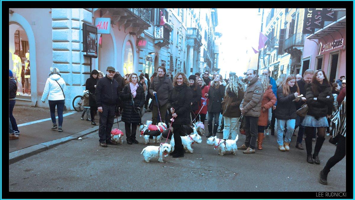 Roma Dog 2 #leerudnicki #photography #rome #roma #italy #italia #travel #ig #art #love  #picoftheday #igersroma #instagood #romeitaly #photooftheday #travelphotography #lazio #europe #igersitalia #paris #like #visitrome #instagram #history #photo #follow #travelgram #bhfyp #dog https://t.co/M36Gss5nPD