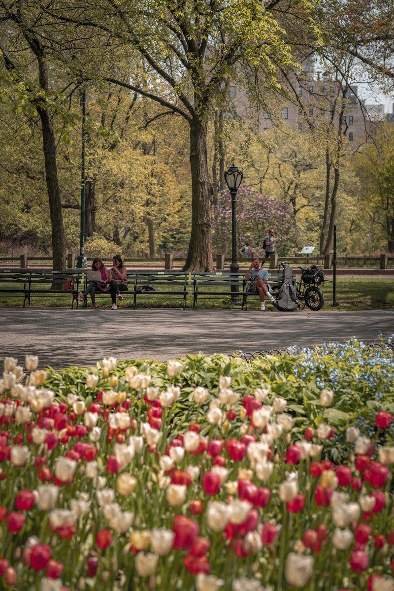 #centralpark #imagesofnyc #springinnyc #loves_nyc #splendid_shotz #nyclife #ny1pic #nycityworld #cbsnewyork #newyork_ig #nbc4ny #icapture_nyc #newyork_instagram #nycviews #travelnyc #thisisnewyorkcity #nycgram #lightphotography #tlpicks #nycphoto #urbanromantix #hellobigapple