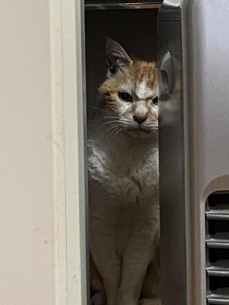 彼氏の実家に訳あって子猫がやってきた!しかし先住猫がブチ切れた表情で見つめる姿が衝撃的!