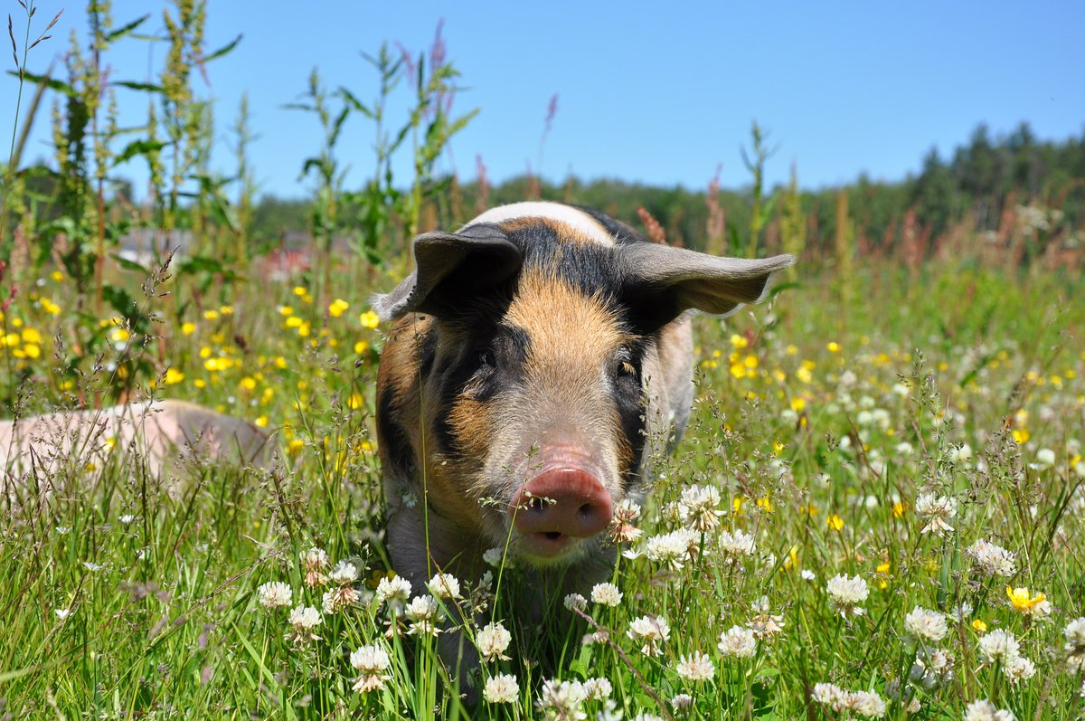 """test Twitter Media - """"I hear the pigs rolling in the mud. I see the grass swaying in the wind. I hear the cars zooming past."""" from 'At the Farm', Max Dixon, commended in the @youngpoetsnet People Need Nature challenge https://t.co/YU0PTiqZH3 #MHAW #MentalHealthAwarenessWeek #nature https://t.co/mwnn4trdR0"""