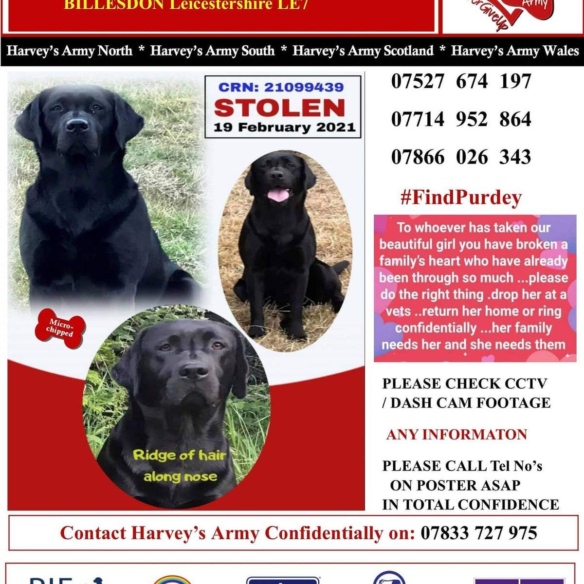‼️URGENT RETWEETS ‼️ #stolen #Leicestershire 19.02.21 💔 12 weeks of complete and utter devastation.  #Sheneedstobehome  pls help! If you know something.. say something! #FindPurdey