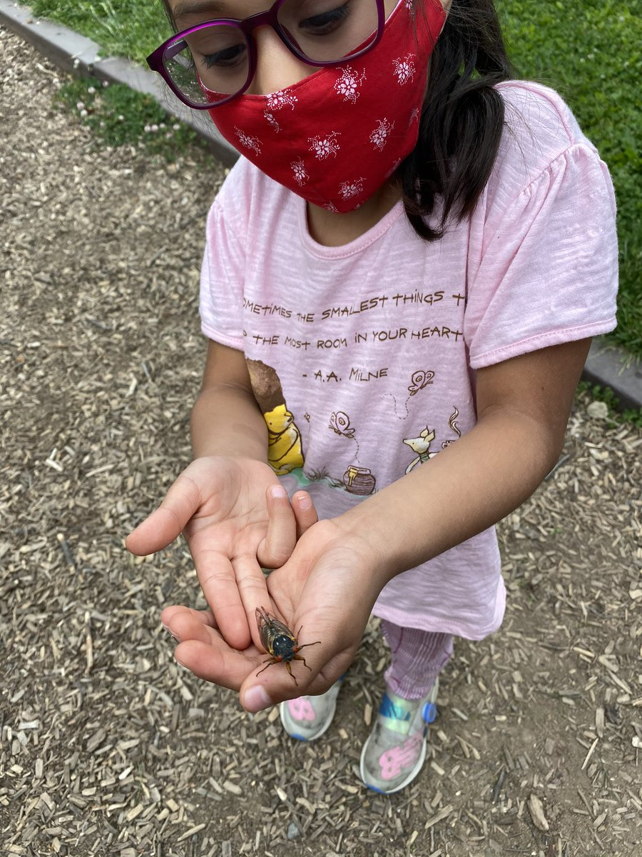 Incase anyone was wondering- yes the cicadas are coming out at Tuckahoe Park!!! And these kiddos are loving it 😅 <a target='_blank' href='http://search.twitter.com/search?q=TuckahoeRocks'><a target='_blank' href='https://twitter.com/hashtag/TuckahoeRocks?src=hash'>#TuckahoeRocks</a></a> <a target='_blank' href='http://twitter.com/TuckPrinc'>@TuckPrinc</a> <a target='_blank' href='http://twitter.com/TuckahoeSchool'>@TuckahoeSchool</a> <a target='_blank' href='http://twitter.com/TESschoolyard'>@TESschoolyard</a> <a target='_blank' href='https://t.co/o7z0uydNU0'>https://t.co/o7z0uydNU0</a>
