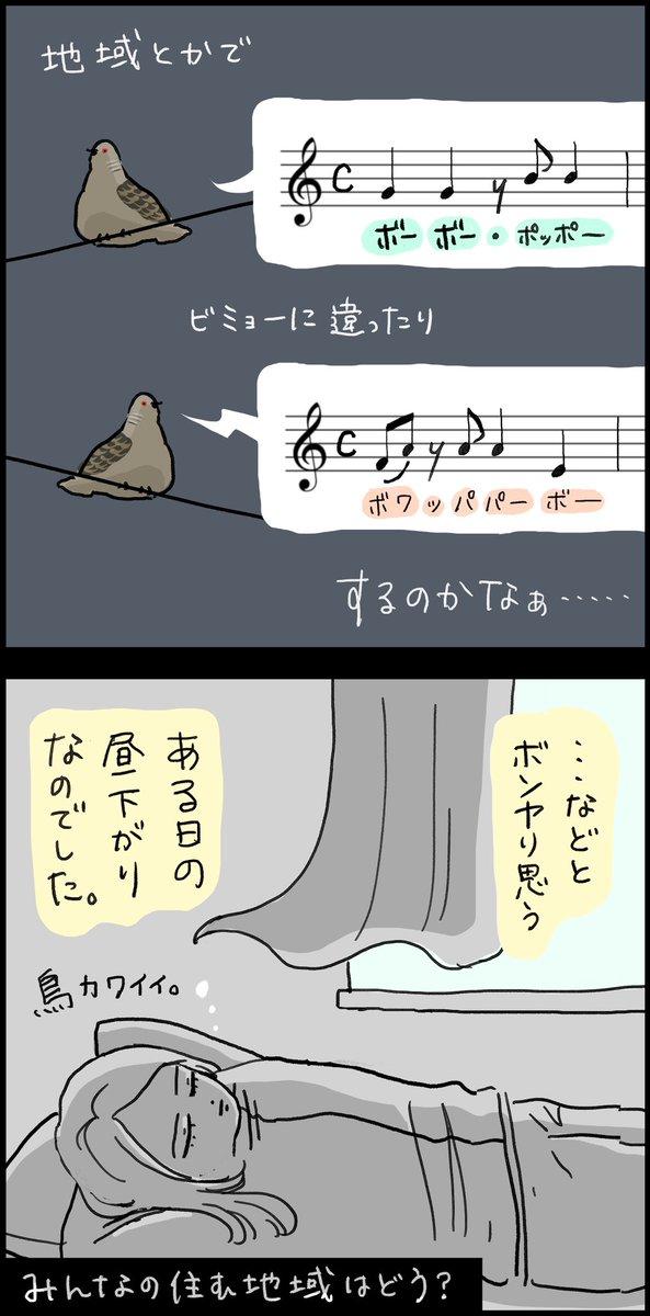 実は地域によって鳴き声が違う?!キジバトの鳴き声に関するお話!