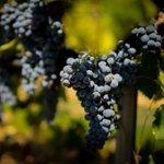 Image for the Tweet beginning: #notizie #sicilia Sì dall'Europa al vino