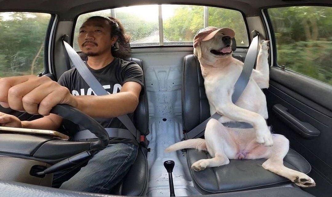 大事な友人(犬)、素敵な時間を過ごしてきたことが分かる