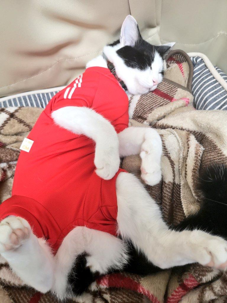 猫 知覚 過敏