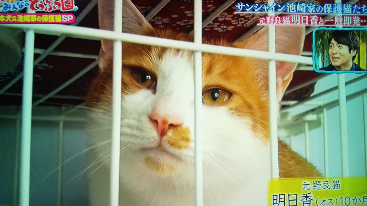 サンシャイン 池崎 保護 猫