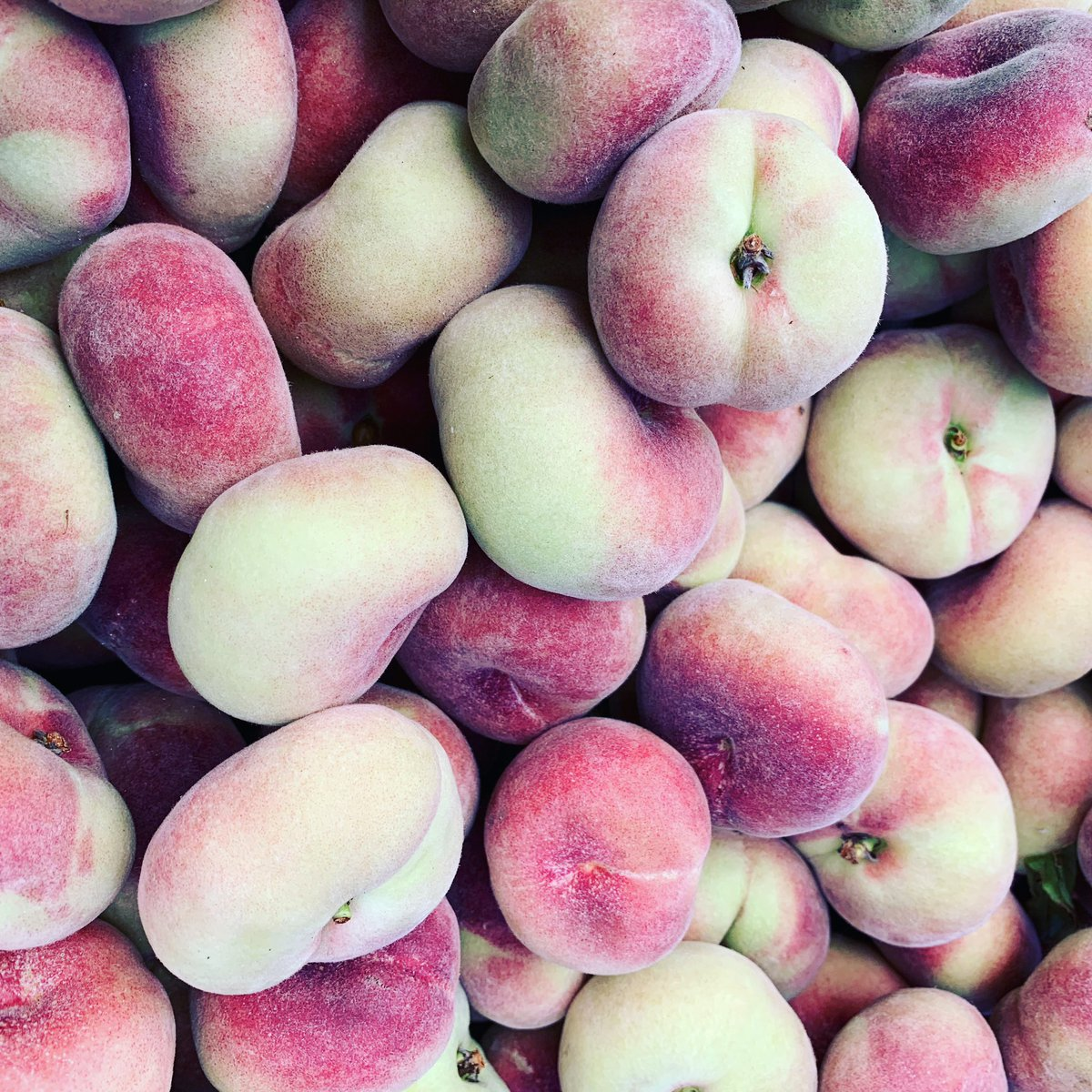 Doughnut peaches are back at Twin Girls organic farm! Yummy yummy yummy for my tummy!   At Grand Lake, Oakland 9-2 slingin sauce! Cool and cloudy but should be dry from here out.  Love & hot sauce ❤️🔥🌶  Scott #luckydoghotsauce #foodsbestfriend https://t.co/2EnUi9u9m8