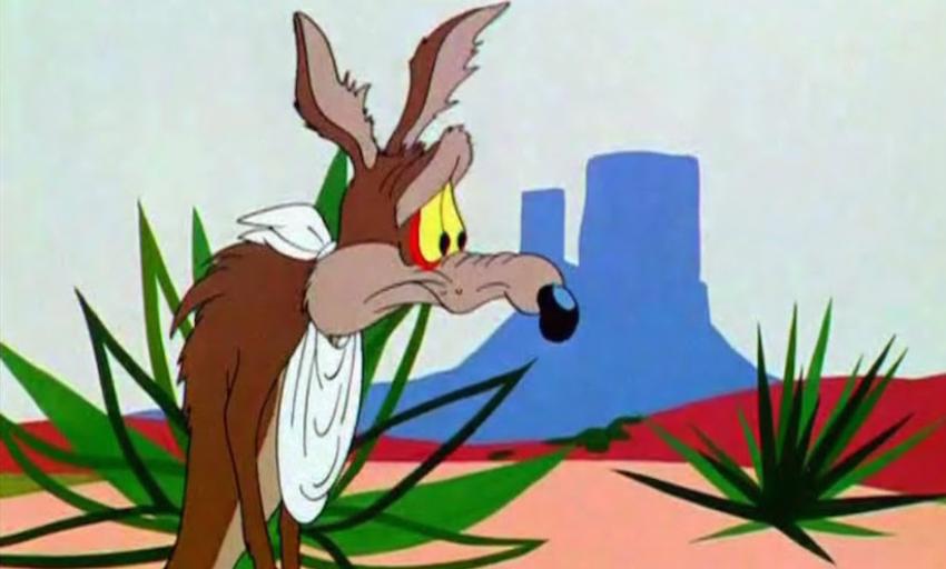 coyote 482x800