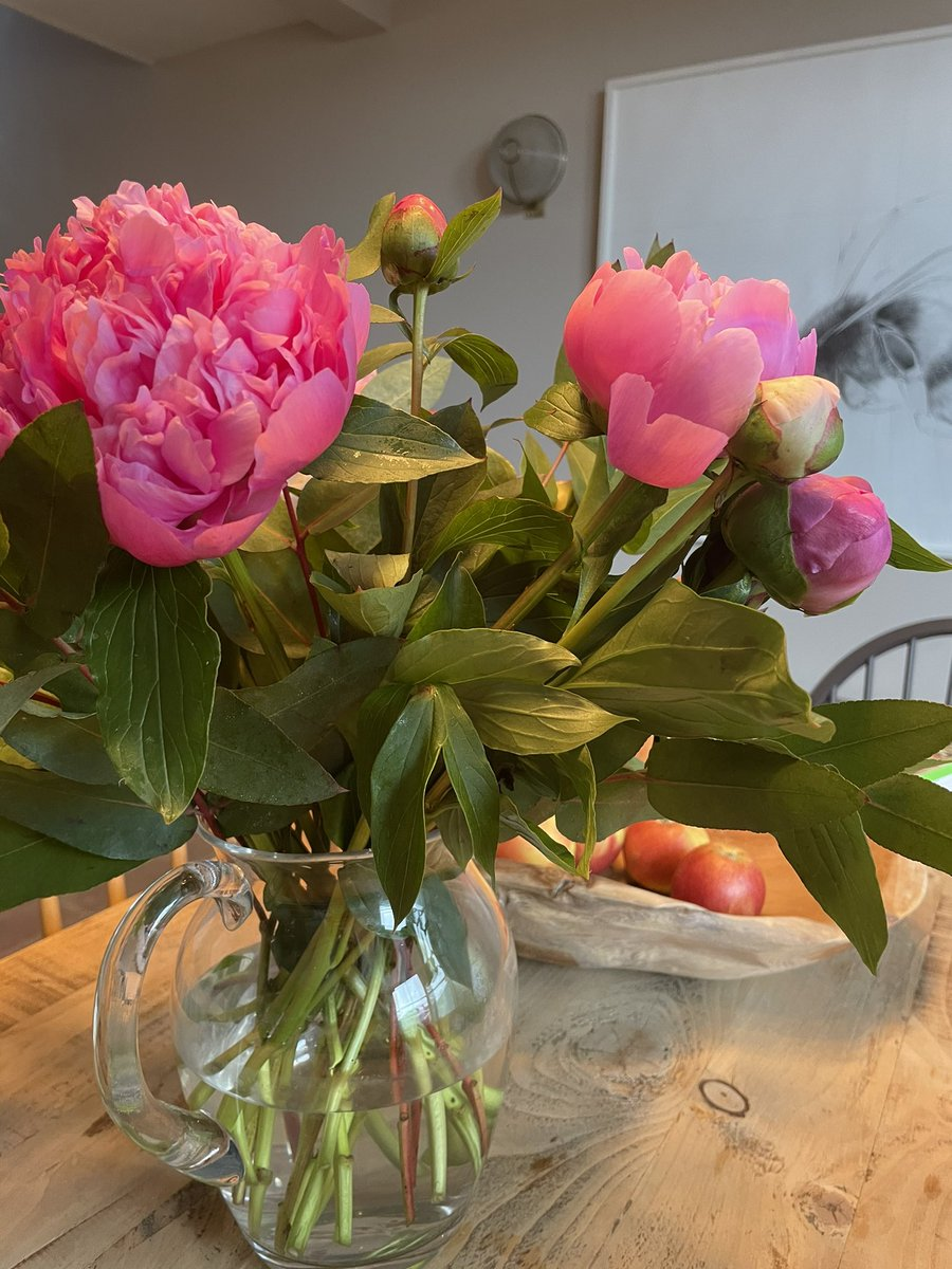 Wanted to add to the Peony envy ... thanks @Charliecondou @ArenaFlowers . Just gorgeous. Signed up for a pet friendly subscription from this ethical flower delivery company. So that totally worked ....  what do we get when it's National Cashmere day ? Can't wait ... https://t.co/7iJ94SS4te