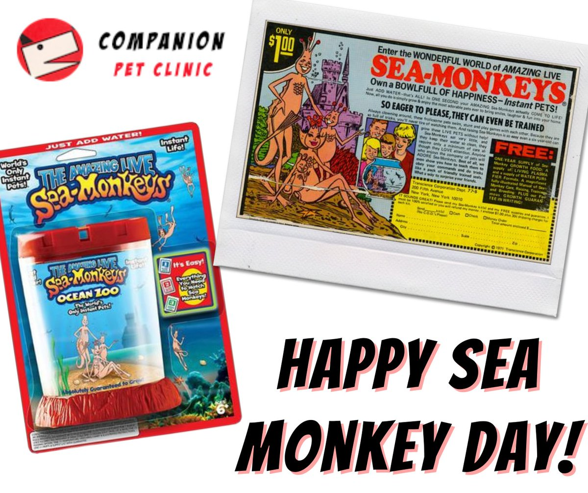 Did you know that today is National Sea Monkey Day? Did you have one of these