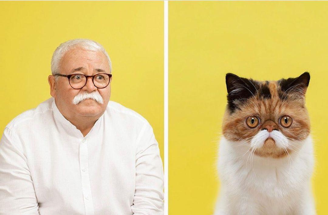 ペットは飼い主に似てくる?飼い主と飼っている猫を比較した結果!