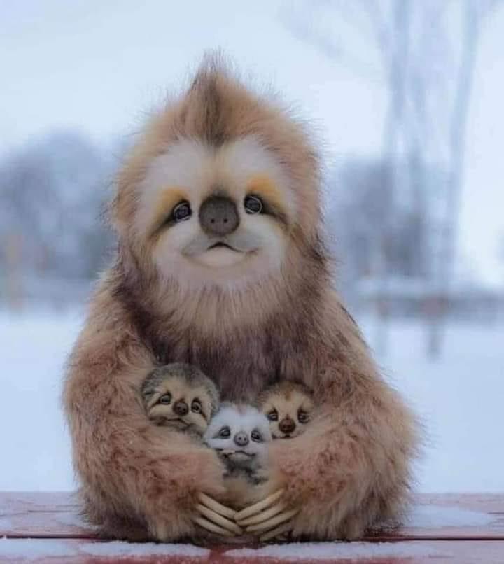 RT @sty__74: Wie süß kann 1 Familienfoto sein? 🥺  Faultiere: Ja https://t.co/rZg3zfrpYk
