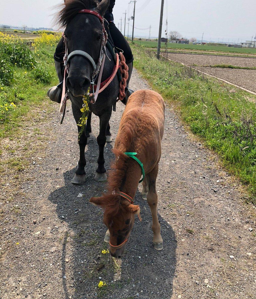 花冠が似合っている仔馬!しかし、隙をついて母馬に食べれてしまった!